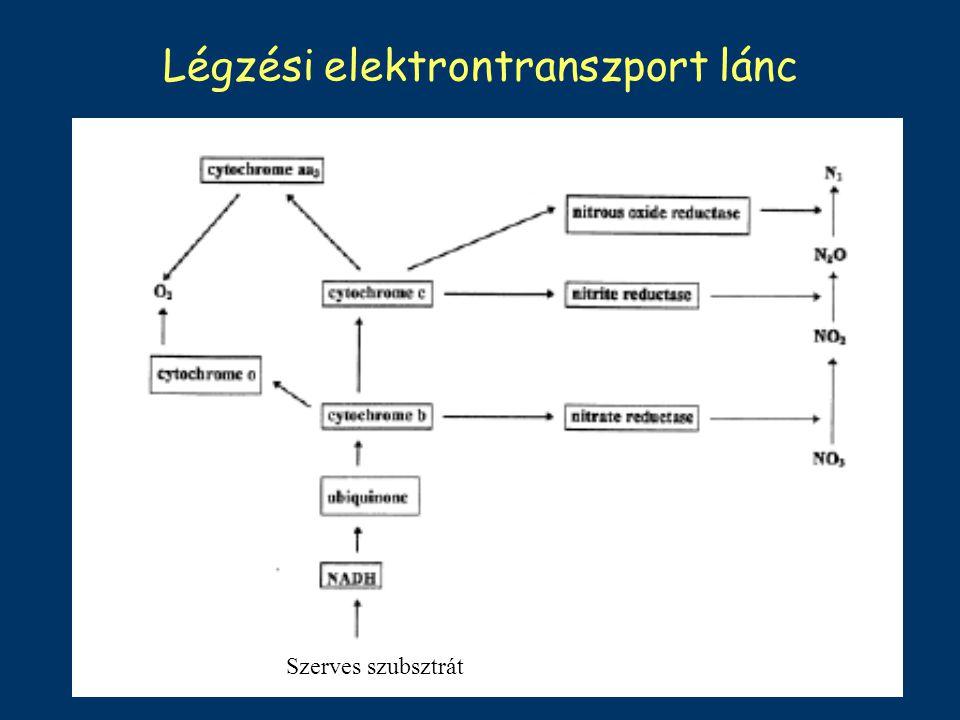 Légzési elektrontranszport lánc Szerves szubsztrát