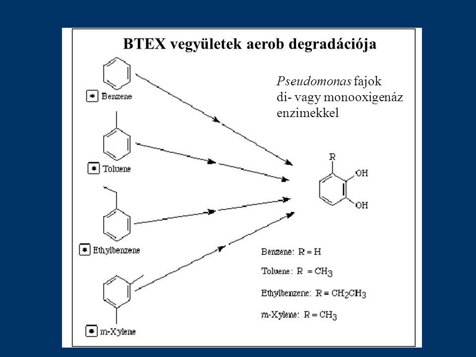 BTEX vegyületek aerob degradációja Pseudomonas fajok di- vagy monooxigenáz enzimekkel