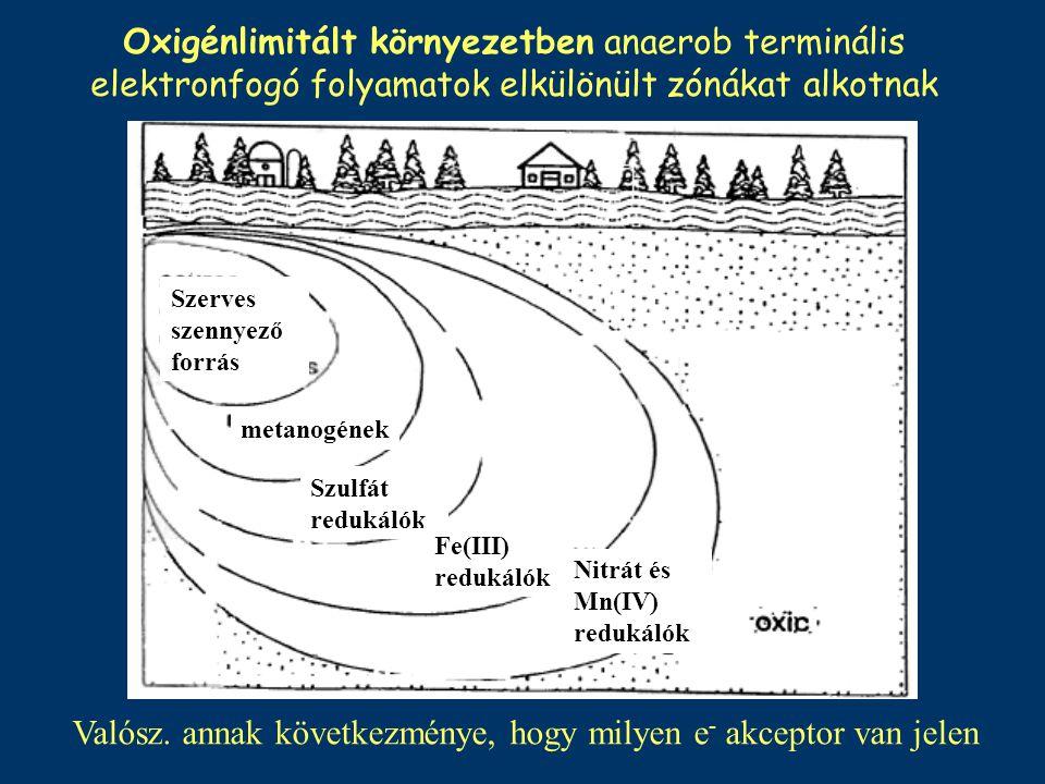 Oxigénlimitált környezetben anaerob terminális elektronfogó folyamatok elkülönült zónákat alkotnak Szerves szennyező forrás metanogének Szulfát reduká