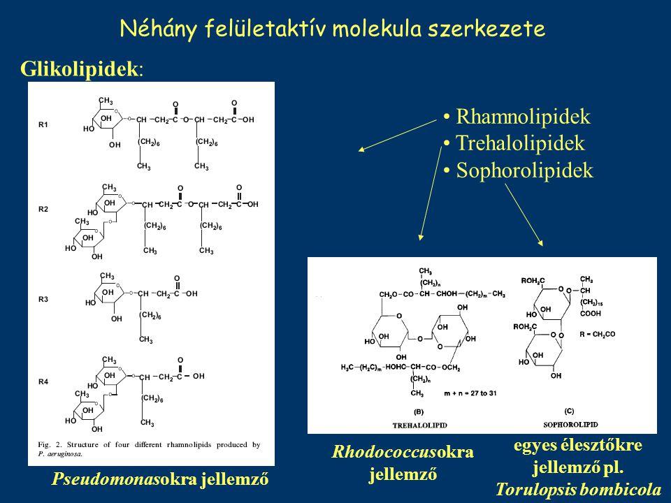 Néhány felületaktív molekula szerkezete Pseudomonasokra jellemző Rhodococcusokra jellemző egyes élesztőkre jellemző pl. Torulopsis bombicola Glikolipi