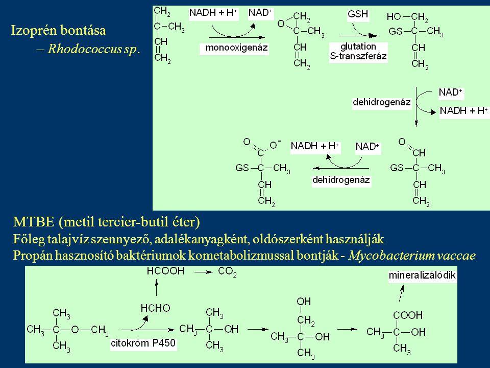 Alifás szénhidrogének anaerob lebontása Oxigén hiányában Folyamat lassú Elektronakceptorként szulfátot vagy nitrátot használnak Pl.