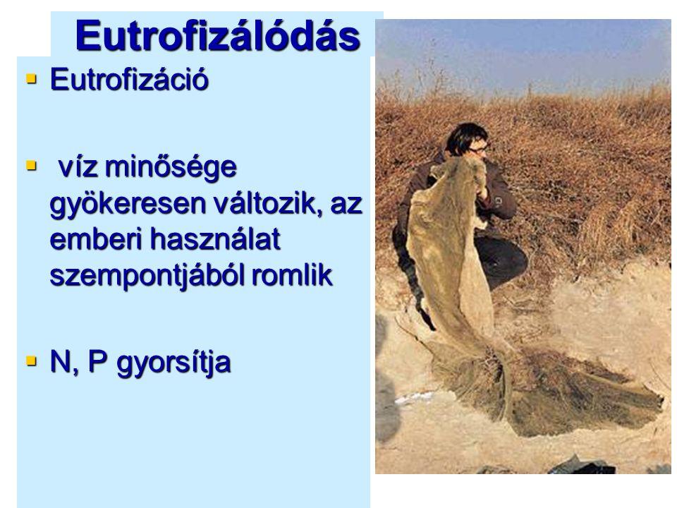 Eutrofizálódás  Eutrofizáció  víz minősége gyökeresen változik, az emberi használat szempontjából romlik  N, P gyorsítja
