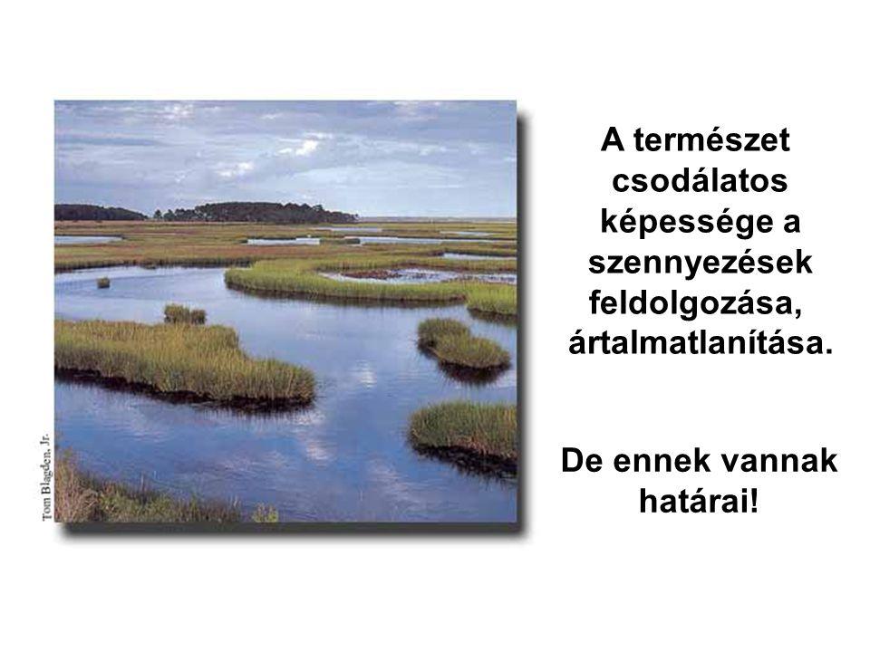 A természet csodálatos képessége a szennyezések feldolgozása, ártalmatlanítása. De ennek vannak határai!