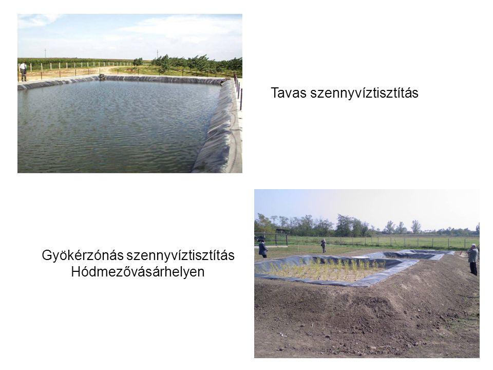 Tavas szennyvíztisztítás Gyökérzónás szennyvíztisztítás Hódmezővásárhelyen