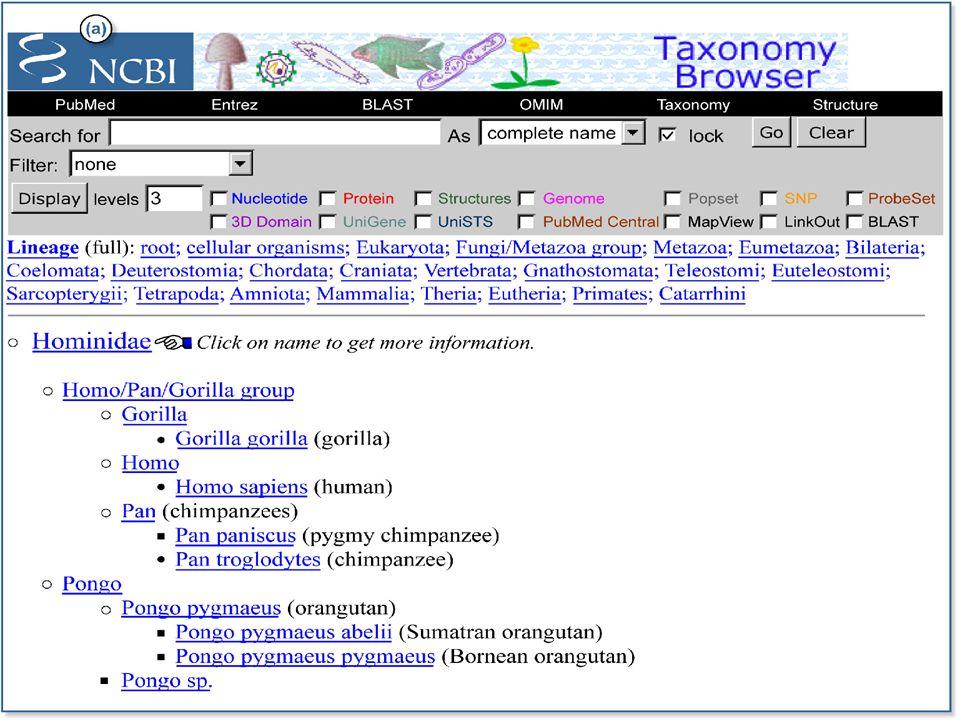 Megjelenítés a Taxonomy Entrezben  Summary -ez az alapértelmezett megjelenítés, négy információ jelenik meg: a taxon tudományos neve, közneve, taxonómiai rangja, BLAST név  Brief -csak a tudományos név jelenik meg  Tax ID List -csak a taxid jelenik meg  Info -a taxonokhoz kapcsolt információkat összefoglalva jeleníti meg  Common tree -vázlatos áttekintést ad a kiválasztott taxon készleten belüli rokonsági kapcsolatokról.