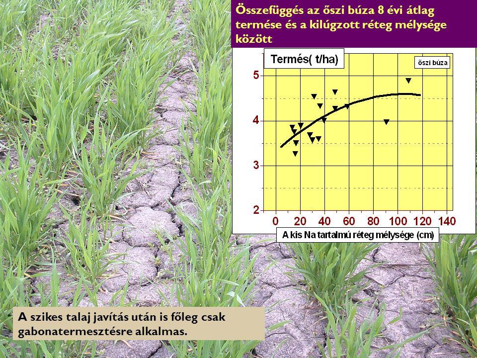 HEFOP 3.3.1. A szikes talaj javítás után is főleg csak gabonatermesztésre alkalmas. Összefüggés az őszi búza 8 évi átlag termése és a kilúgzott réteg