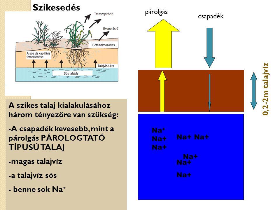 A szikes talaj kialakulásához három tényezőre van szükség: -A csapadék kevesebb, mint a párolgás PÁROLOGTATÓ TÍPUSÚ TALAJ -magas talajvíz -a talajvíz sós - benne sok Na + Na+ 0,2-2m talajvíz Szikesedés Na + Na+ Na+ Na+ párolgás csapadék