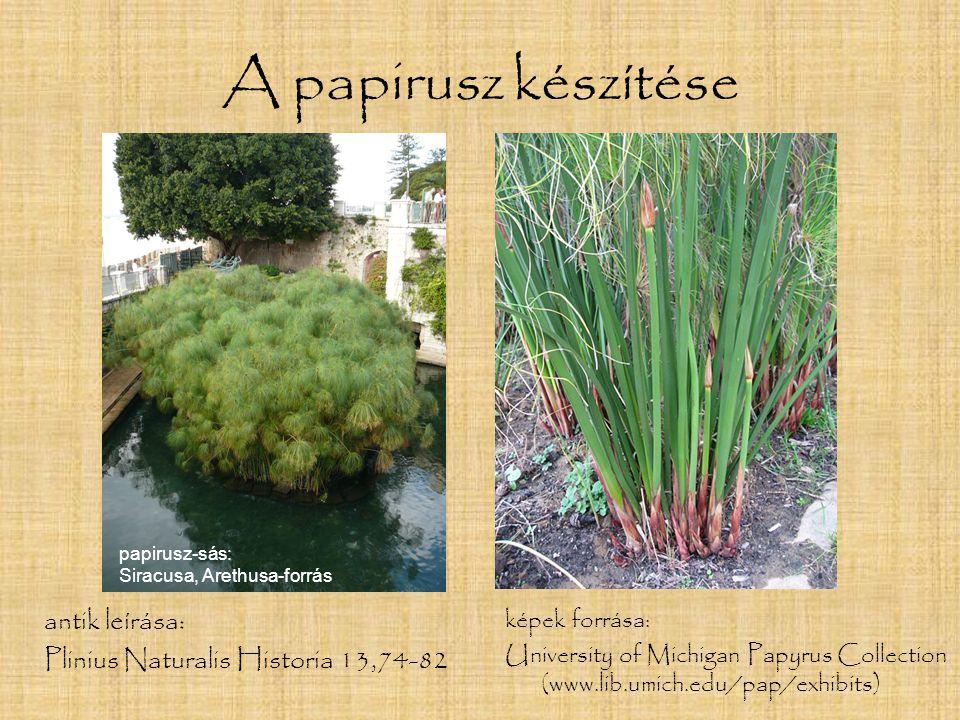 A papirusz készítése antik leírása: Plinius Naturalis Historia 13,74-82 képek forrása: University of Michigan Papyrus Collection (www.lib.umich.edu/pa