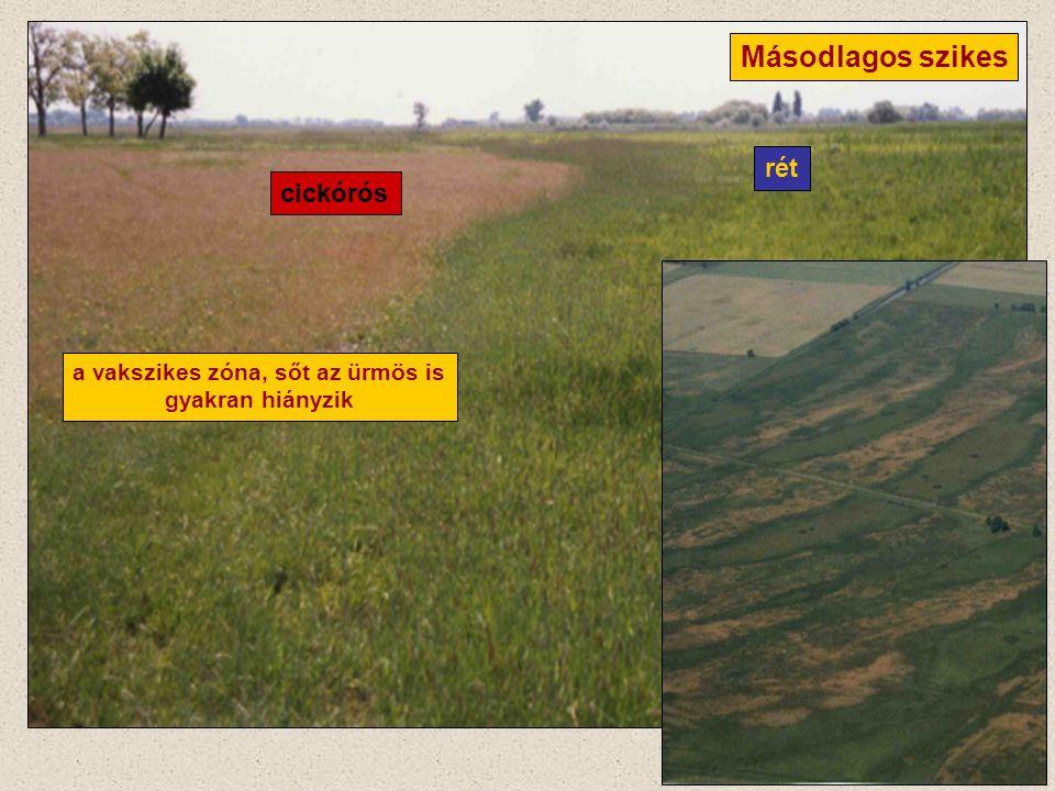 Másodlagos szikes rét cickórós a vakszikes zóna, sőt az ürmös is gyakran hiányzik
