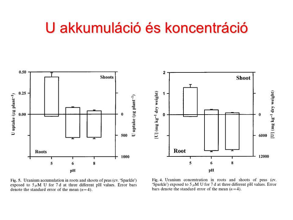 U akkumuláció és koncentráció