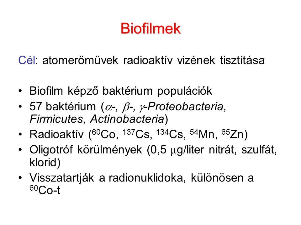 Biofilmek Cél: atomerőművek radioaktív vizének tisztítása Biofilm képző baktérium populációk 57 baktérium (  -,  -,  -Proteobacteria, Firmicutes, Actinobacteria) Radioaktív ( 60 Co, 137 Cs, 134 Cs, 54 Mn, 65 Zn) Oligotróf körülmények (0,5 µ g/liter nitrát, szulfát, klorid) Visszatartják a radionuklidoka, különösen a 60 Co-t