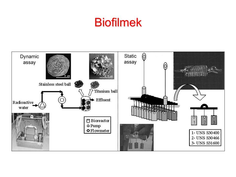 Biofilmek