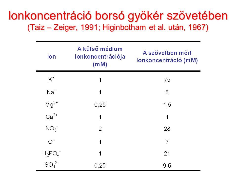 Ionkoncentráció borsó gyökér szövetében (Taiz – Zeiger, 1991; Higinbotham et al. után, 1967)