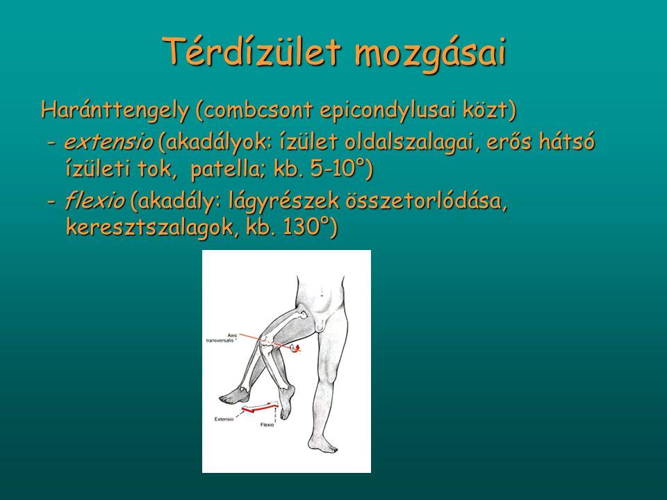 Térdízület mozgásai Haránttengely (combcsont epicondylusai közt) - extensio (akadályok: ízület oldalszalagai, erős hátsó ízületi tok, patella; kb. 5-1