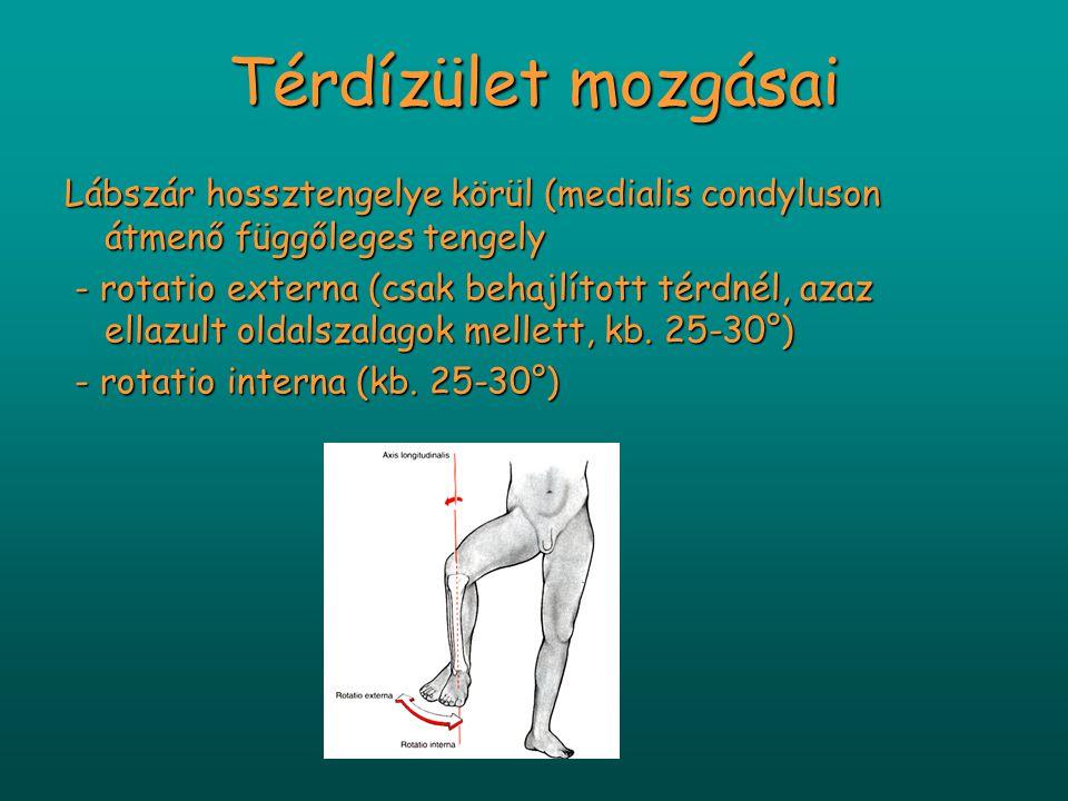 Térdízület mozgásai Lábszár hossztengelye körül (medialis condyluson átmenő függőleges tengely - rotatio externa (csak behajlított térdnél, azaz ellazult oldalszalagok mellett, kb.