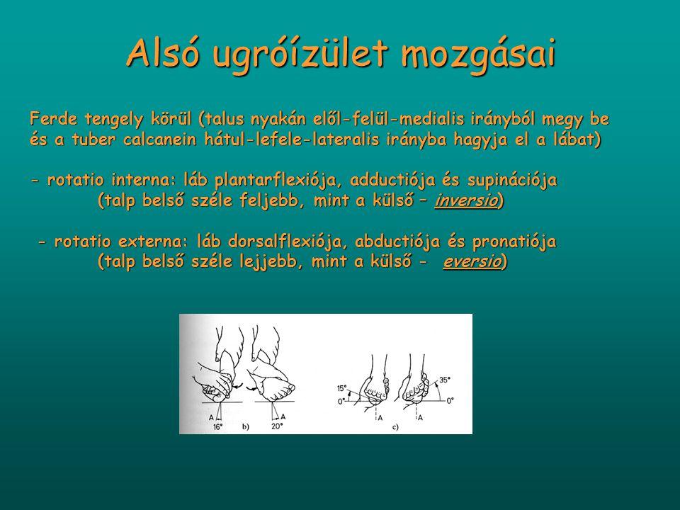 Alsó ugróízület mozgásai Ferde tengely körül (talus nyakán elől-felül-medialis irányból megy be és a tuber calcanein hátul-lefele-lateralis irányba ha