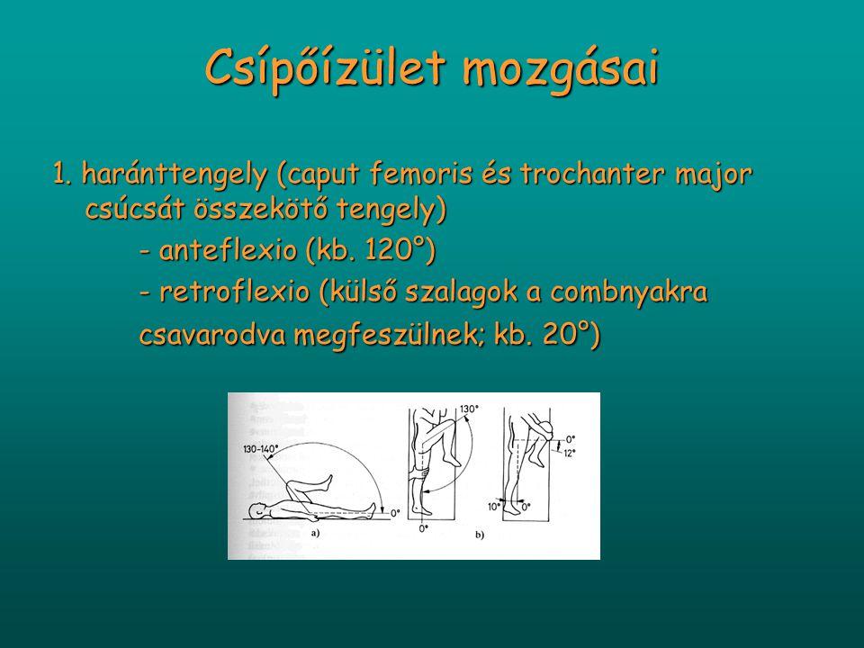 Csípőízület mozgásai 1. haránttengely (caput femoris és trochanter major csúcsát összekötő tengely) - anteflexio (kb. 120°) - retroflexio (külső szala