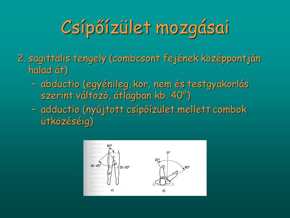 Csípőízület mozgásai 2. sagittalis tengely (combcsont fejének középpontján halad át) –abductio (egyénileg, kor, nem és testgyakorlás szerint változó,