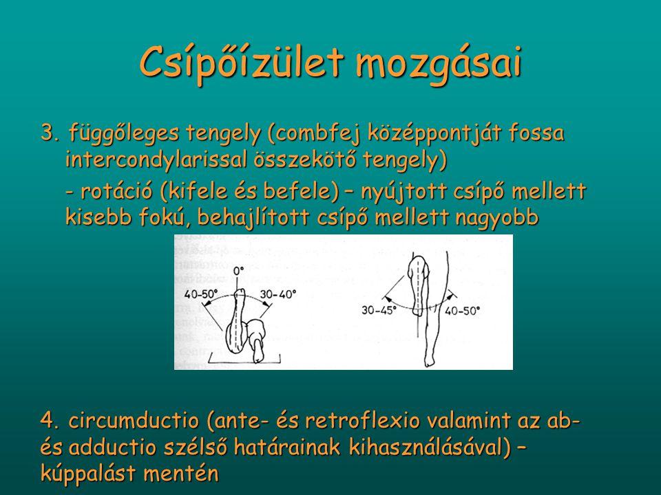 Csípőízület mozgásai 3. függőleges tengely (combfej középpontját fossa intercondylarissal összekötő tengely) - rotáció (kifele és befele) – nyújtott c