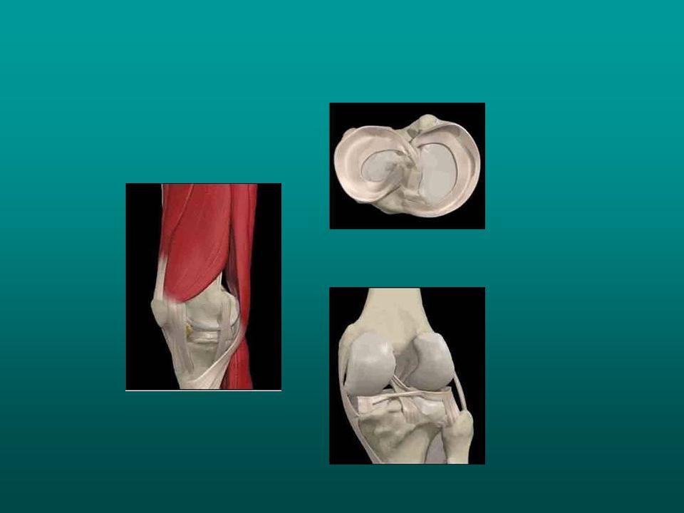 A LÁB EGÉSZBEN A láb boltozatos szerkezet, amely a járás, ugrás stb.