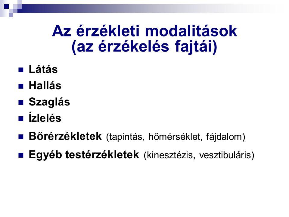 Az érzékleti modalitások (az érzékelés fajtái) Látás Hallás Szaglás Ízlelés Bőrérzékletek (tapintás, hőmérséklet, fájdalom) Egyéb testérzékletek (kine