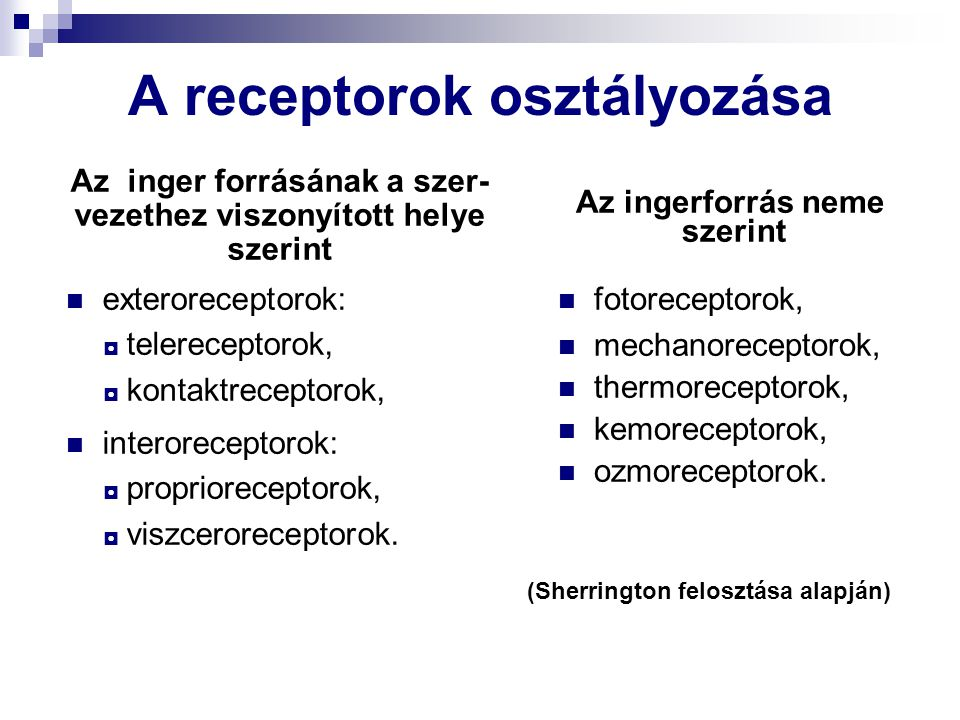 A receptorok osztályozása Az inger forrásának a szer- vezethez viszonyított helye szerint exteroreceptorok: ◘ telereceptorok, ◘ kontaktreceptorok, interoreceptorok: ◘ proprioreceptorok, ◘ viszceroreceptorok.