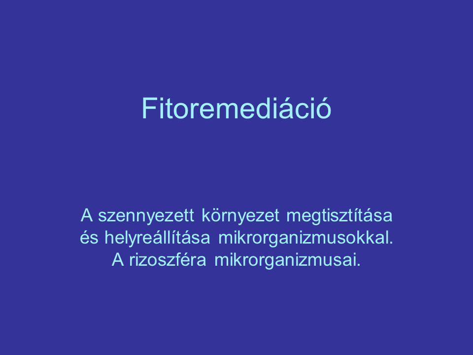 Fitoremediáció A szennyezett környezet megtisztítása és helyreállítása mikrorganizmusokkal.