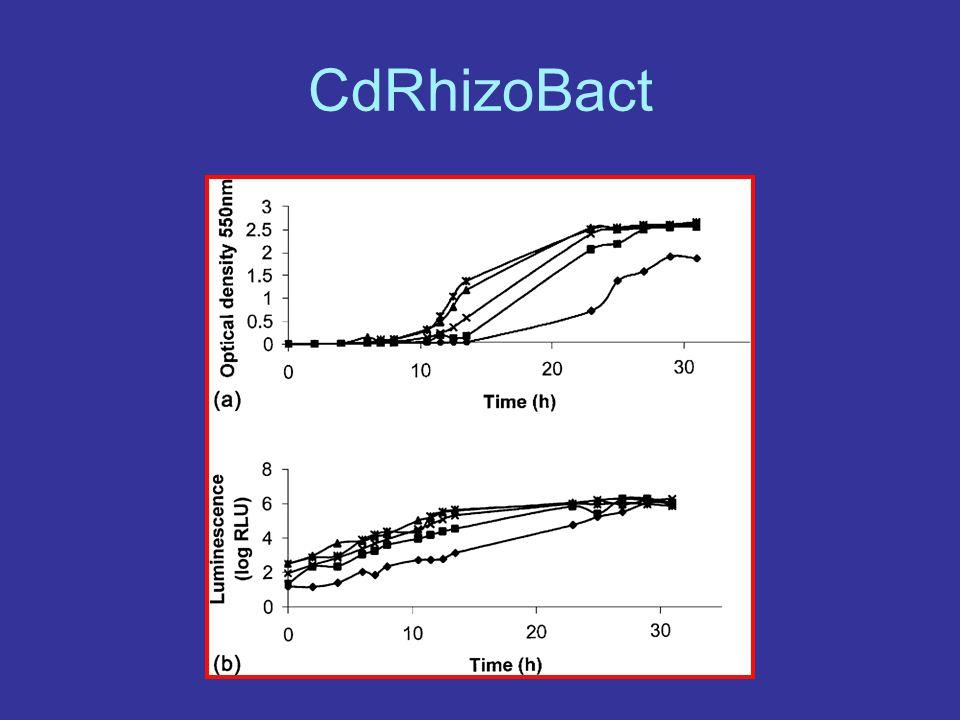 CdRhizoBact