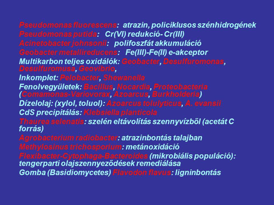 Pseudomonas fluorescens: atrazin, policiklusos szénhidrogének Pseudomonas putida: Cr(VI) redukció- Cr(III) Acinetobacter johnsonii: polifoszfát akkumuláció Geobacter metallireducens: Fe(III)-Fe(II) e-akceptor Multikarbon teljes oxidálók: Geobacter, Desulfuromonas, Desulfuromusa, Geovibrio, Inkomplet: Pelobacter, Shewanella Fenolvegyületek: Bacillus, Nocardia, Proteobacteria (Comamonas-Variovorax, Azoarcus, Burkholderia) Dízelolaj: (xylol, toluol): Azoarcus tolulyticus, A.