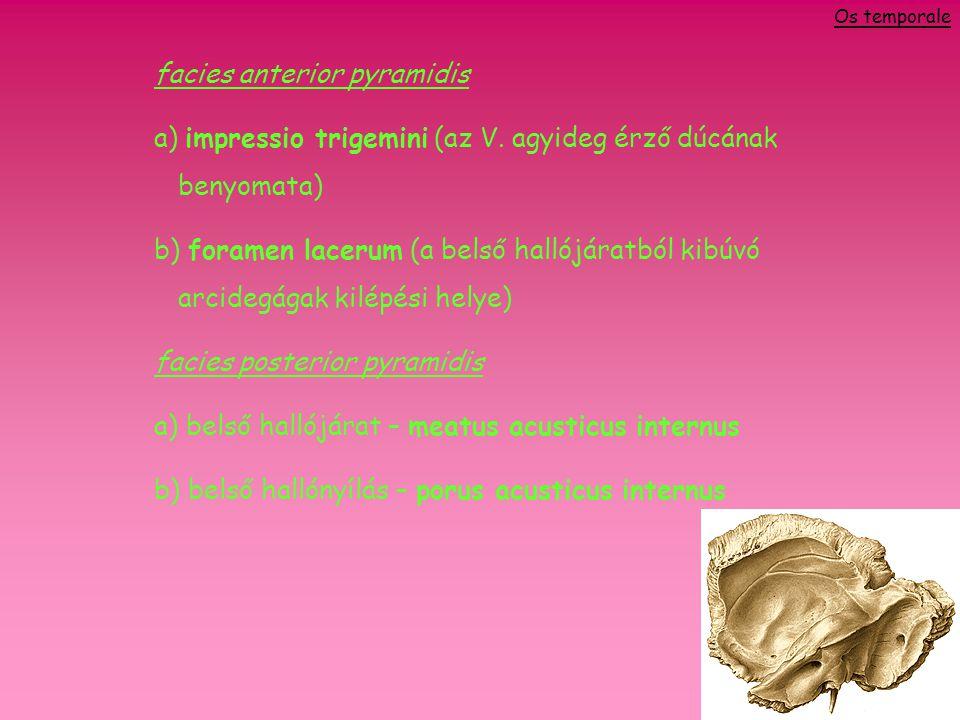 facies anterior pyramidis a) impressio trigemini (az V.