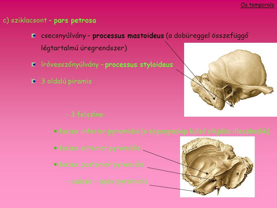 a)proc.mastoideus és proc. styloideus között foramen stylomastoideum (VII.
