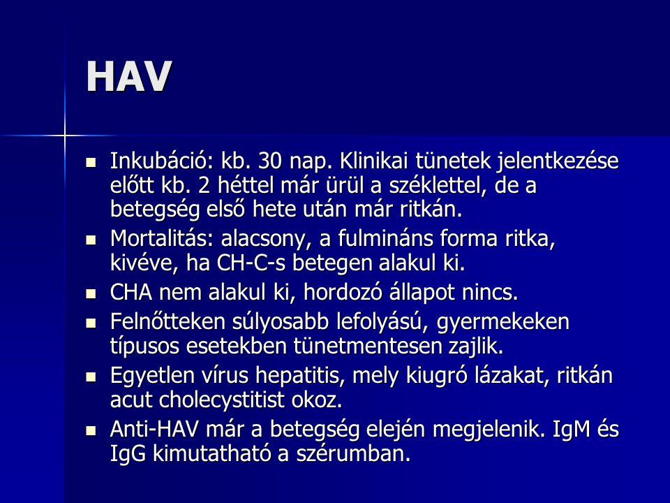 HAV 27nm-s pikornavírus családba tartozó RNS vírus, járványosan, vagy sporadikusan okoz hepatitist. 27nm-s pikornavírus családba tartozó RNS vírus, já