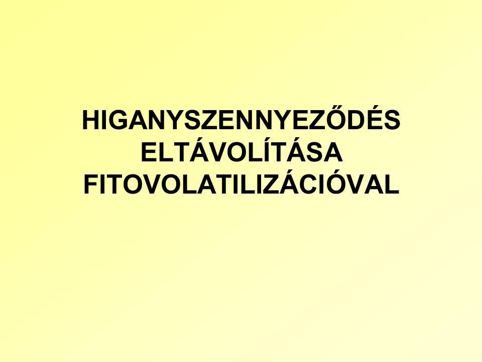 HIGANYSZENNYEZŐDÉS ELTÁVOLÍTÁSA FITOVOLATILIZÁCIÓVAL