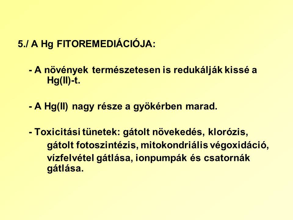 5./ A Hg FITOREMEDIÁCIÓJA: - A növények természetesen is redukálják kissé a Hg(II)-t.