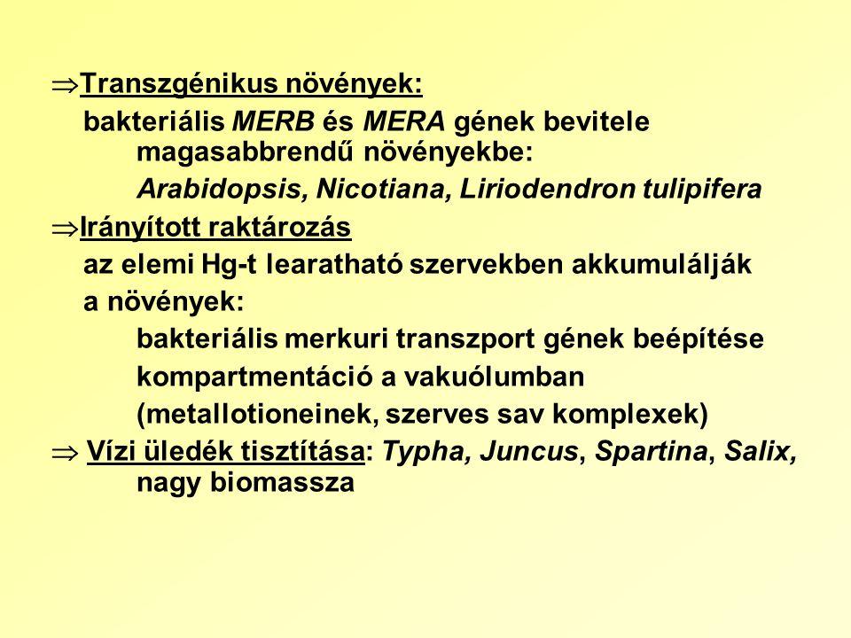  Transzgénikus növények: bakteriális MERB és MERA gének bevitele magasabbrendű növényekbe: Arabidopsis, Nicotiana, Liriodendron tulipifera  Irányított raktározás az elemi Hg-t learatható szervekben akkumulálják a növények: bakteriális merkuri transzport gének beépítése kompartmentáció a vakuólumban (metallotioneinek, szerves sav komplexek)  Vízi üledék tisztítása: Typha, Juncus, Spartina, Salix, nagy biomassza