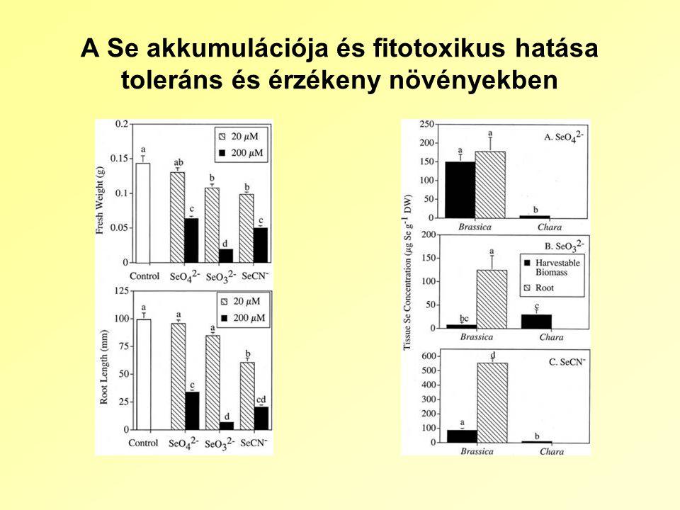 A Se akkumulációja és fitotoxikus hatása toleráns és érzékeny növényekben