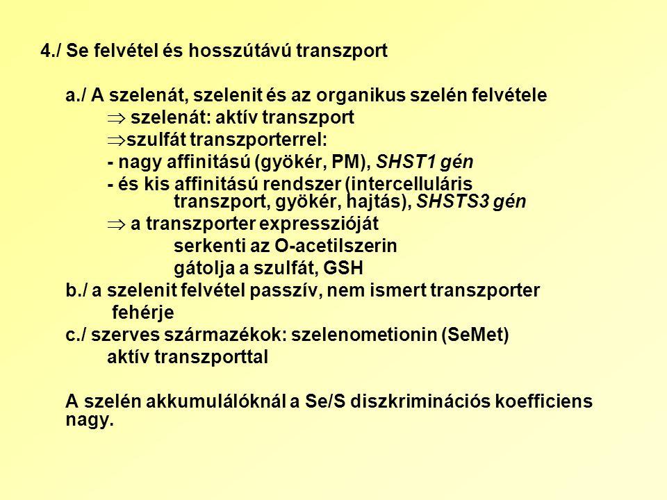 4./ Se felvétel és hosszútávú transzport a./ A szelenát, szelenit és az organikus szelén felvétele  szelenát: aktív transzport  szulfát transzporterrel: - nagy affinitású (gyökér, PM), SHST1 gén - és kis affinitású rendszer (intercelluláris transzport, gyökér, hajtás), SHSTS3 gén  a transzporter expresszióját serkenti az O-acetilszerin gátolja a szulfát, GSH b./ a szelenit felvétel passzív, nem ismert transzporter fehérje c./ szerves származékok: szelenometionin (SeMet) aktív transzporttal A szelén akkumulálóknál a Se/S diszkriminációs koefficiens nagy.