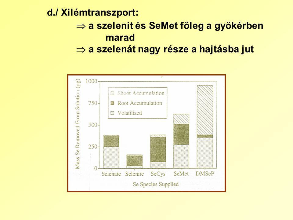 d./ Xilémtranszport:  a szelenit és SeMet főleg a gyökérben marad  a szelenát nagy része a hajtásba jut
