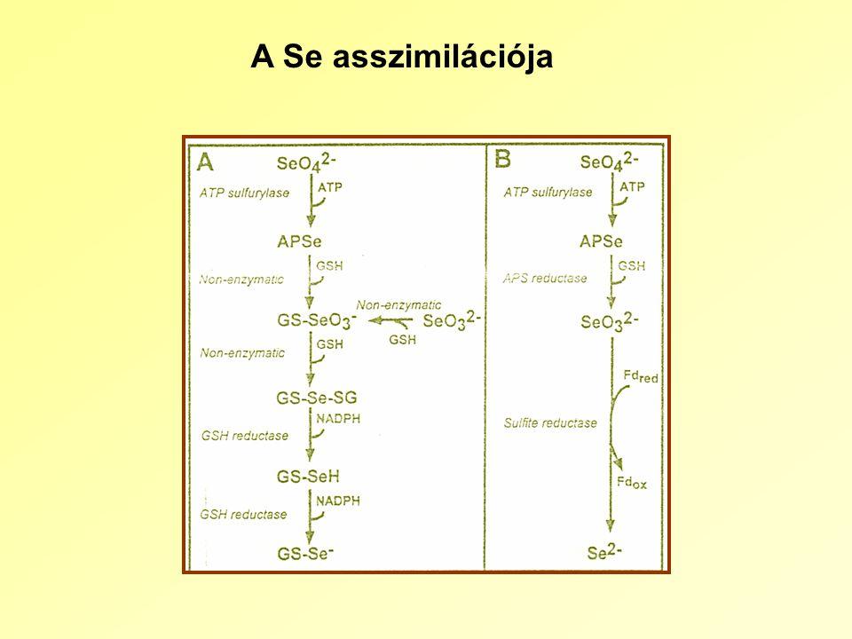 A Se asszimilációja