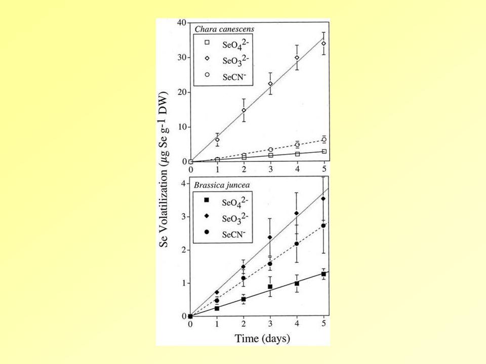 8./ Toxicitás és tolerancia a./ Toxicitás - Se-proteinek képződése a szenzitív növényekben b./ Tolerancia  a SeCys és SeMet intracelluláris elkülönítése a proteinszintézistől: nem proteinépítő aminosavak szintézise (Se-metil-SeCys; SeCystation)  a fehérjeszintézisnél + diszkrimináció a ciszteinil-tRNS-sel szemben  kompartmentáció a vakuólumban: szelenát, szelenoaminosavak