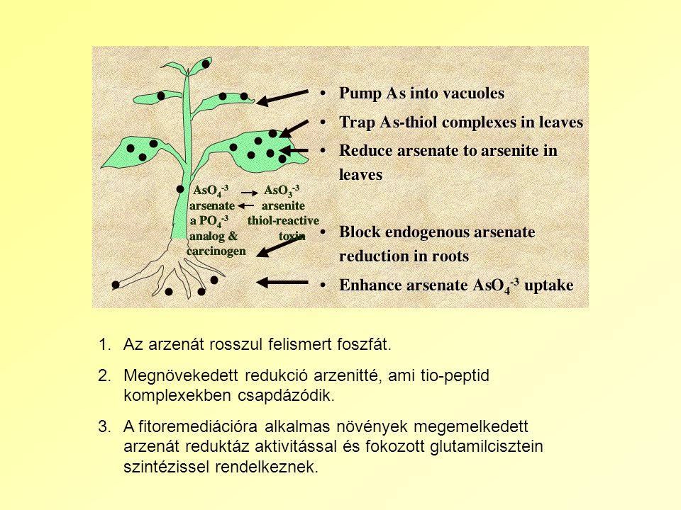 1.Az arzenát rosszul felismert foszfát.