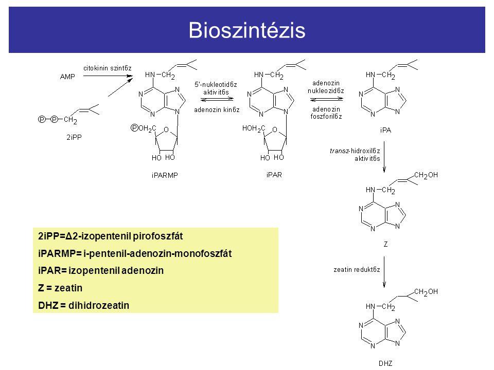 Bioszintézis 2i2i 2iPP2iPP 2iPP=Δ2-izopentenil pirofoszfát iPARMP= i-pentenil-adenozin-monofoszfát iPAR= izopentenil adenozin Z = zeatin DHZ = dihidro