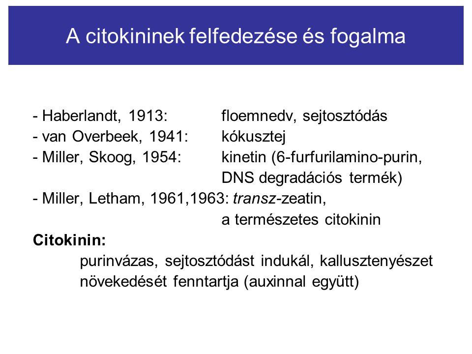- Haberlandt, 1913: floemnedv, sejtosztódás - van Overbeek, 1941: kókusztej - Miller, Skoog, 1954: kinetin (6-furfurilamino-purin, DNS degradációs ter