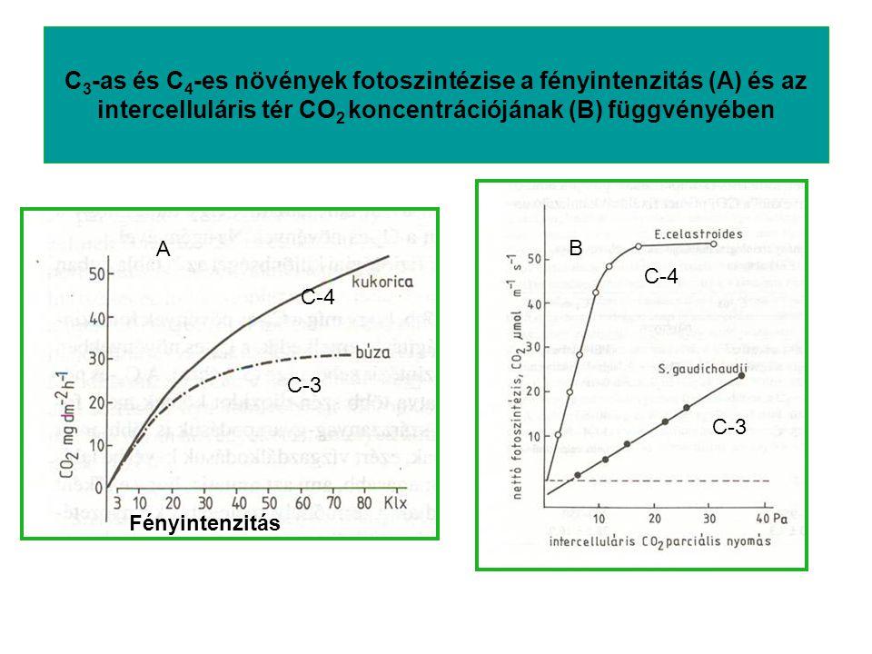 C 3 -as és C 4 -es növények fotoszintézise a fényintenzitás (A) és az intercelluláris tér CO 2 koncentrációjának (B) függvényében Fényintenzitás A B C
