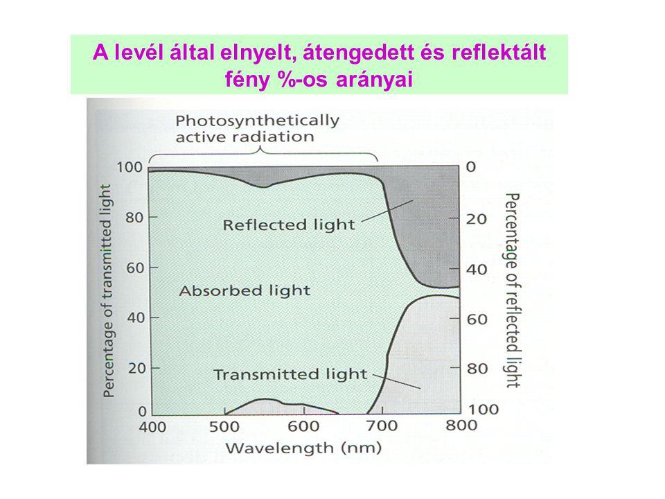 Nagy fényintenzitás (fénystressz) esetén reaktív oxigén formák keletkeznek, ami degradálja a fotoszintetikus apparátust: fénygátlás