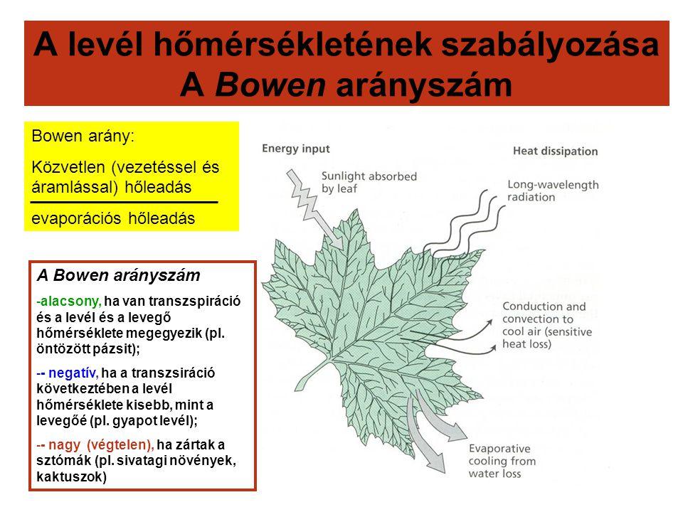 A levél hőmérsékletének szabályozása A Bowen arányszám Bowen arány: Közvetlen (vezetéssel és áramlással) hőleadás evaporációs hőleadás A Bowen aránysz