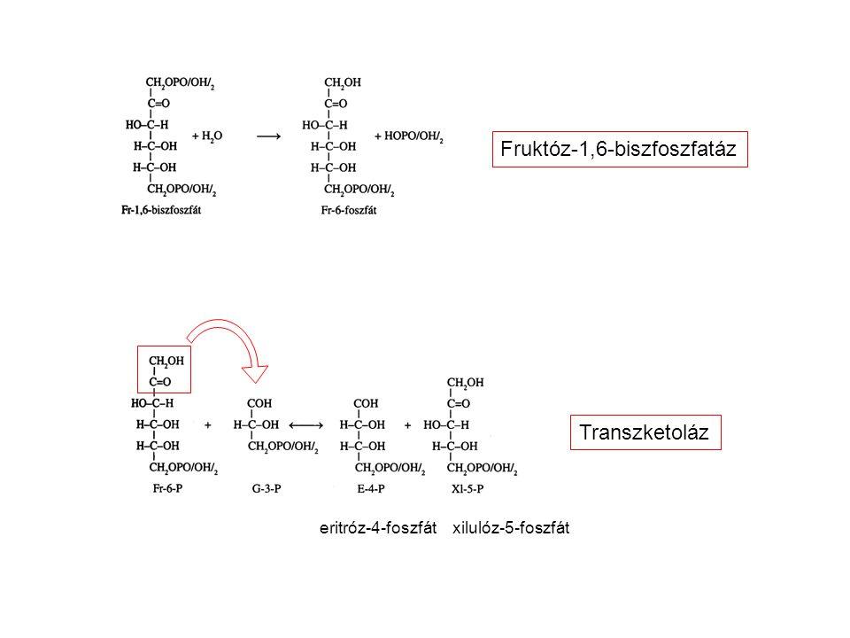 eritróz-4-foszfát xilulóz-5-foszfát Transzketoláz Fruktóz-1,6-biszfoszfatáz