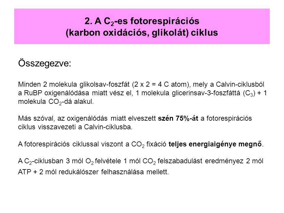 Összegezve: Minden 2 molekula glikolsav-foszfát (2 x 2 = 4 C atom), mely a Calvin-ciklusból a RuBP oxigenálódása miatt vész el, 1 molekula glicerinsav