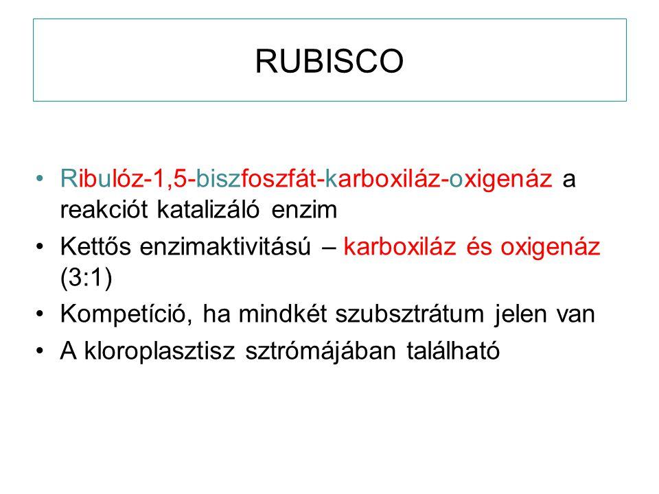 RUBISCO Ribulóz-1,5-biszfoszfát-karboxiláz-oxigenáz a reakciót katalizáló enzim Kettős enzimaktivitású – karboxiláz és oxigenáz (3:1) Kompetíció, ha m