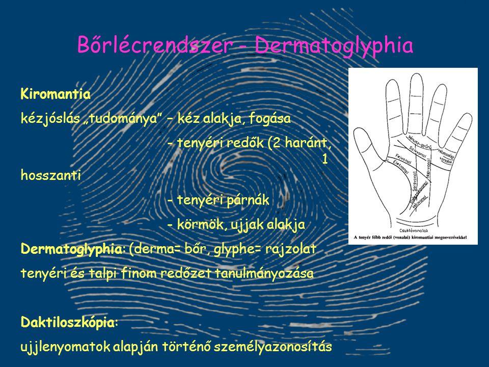 """Bőrlécrendszer - Dermatoglyphia Kiromantia kézjóslás """"tudománya"""" – kéz alakja, fogása - tenyéri redők (2 haránt, 1 hosszanti - tenyéri párnák - körmök"""